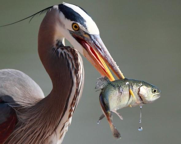 Фотоконкурс National Geographic 2010. Изображение № 39.