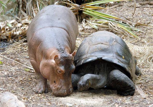 Дружба - она и у животных дружба!. Изображение № 3.