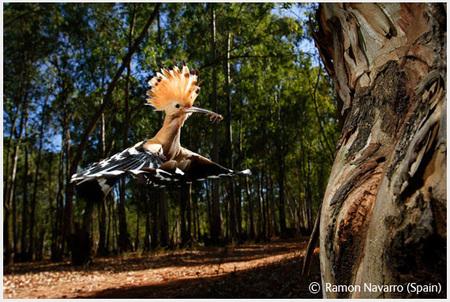 Победители Wildlife Photographer 2008. Изображение № 16.