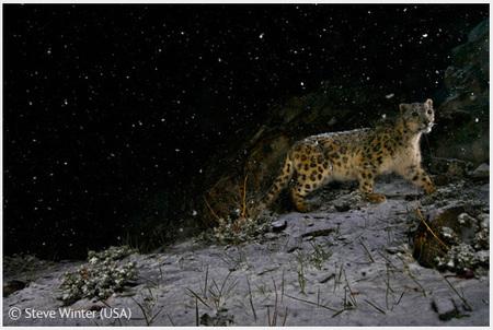 Победители Wildlife Photographer 2008. Изображение № 1.