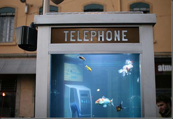 Аквариум втелефонной будке. Изображение № 2.