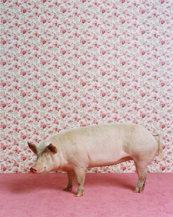 Животноводство отCatherine Ledner. Изображение № 24.