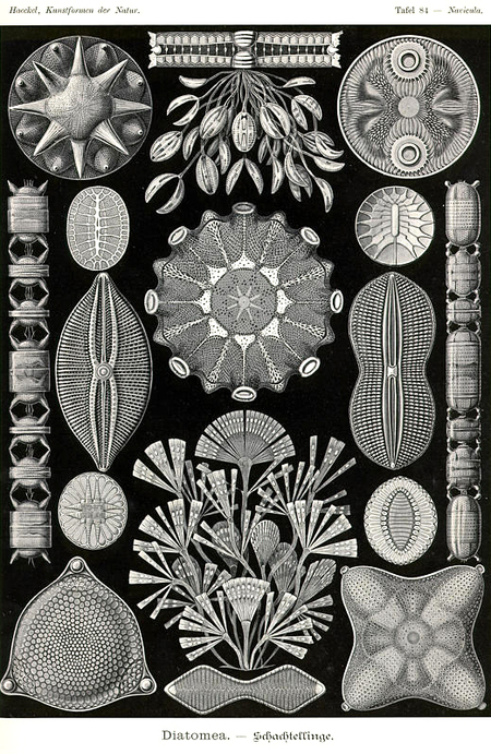 Причудливые формы природы. Изображение № 38.