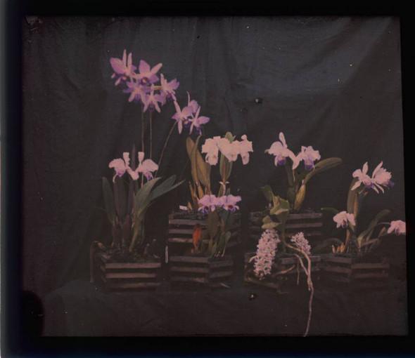 Автохром Люмьер – цветные фотографии начала XX века. Изображение № 25.