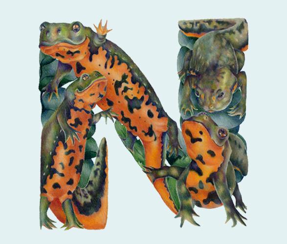 Животный алфавит. Изображение № 17.