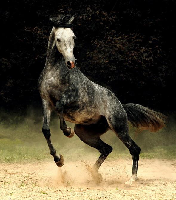 Фотографии лошадей Wojtek Kwiatkowski. Изображение № 1.