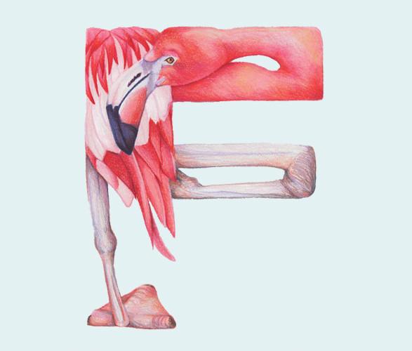 Животный алфавит. Изображение № 19.