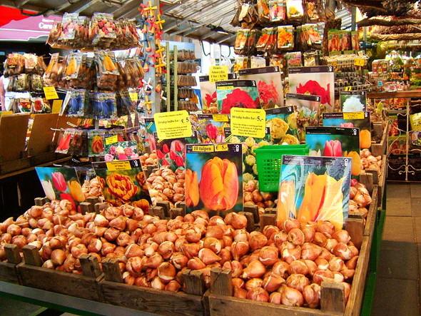 Цветочный рынок в Амстердаме. Изображение № 3.
