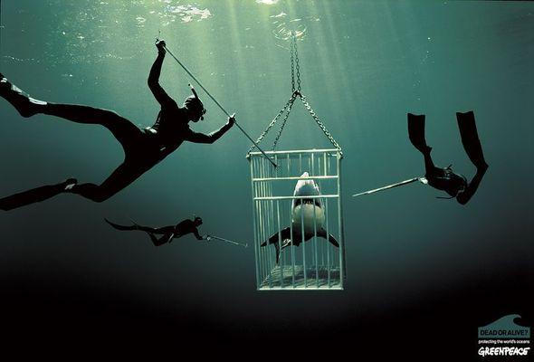 Подводная «художница» – Зена Холлоуэй. Изображение № 20.