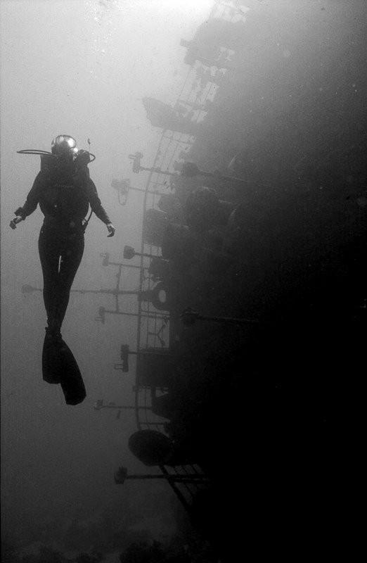 Подводная жизнь глазами фотографа Карлоса Франко. Изображение № 6.