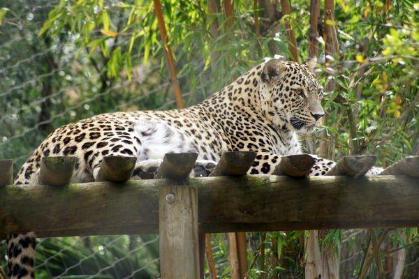 Авиакомпания «Трансаэро» осуществила перевозку двух леопардов . Изображение № 2.