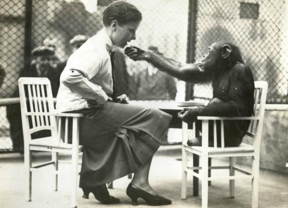 Лондонский Зоопарк 30-х. Изображение № 10.