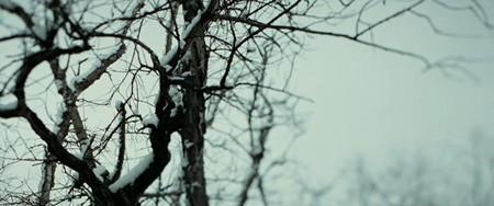 Убийство Джесси Джеймса (Эндрю Доминик, 2007). Изображение № 24.