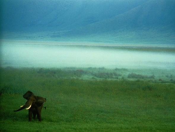 Лучшие снимки от National Geographic (золотой фонд). Изображение № 2.