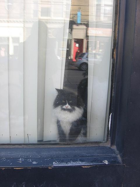 Cat. Window. Изображение № 38.