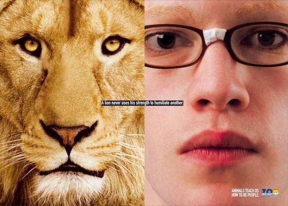 Животные учат нас быть людьми. Изображение № 6.