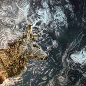 Премьера альбома: Сибирская электроника Nocow & Hmot «Lost In Taiga». Изображение № 3.