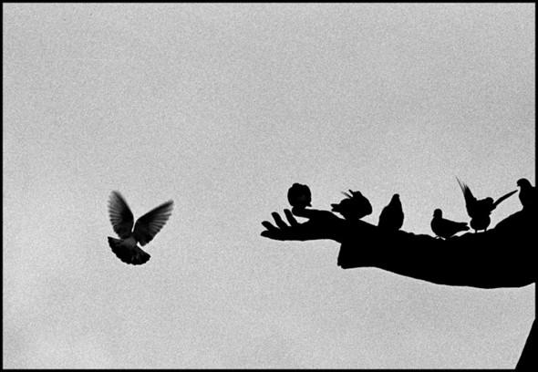 Изображение 8. Файн арт Владимира Селезнёва, или Как сделать чудо из ничего.. Изображение № 8.