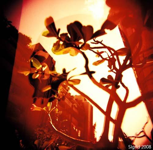 Волшебный ЛОМО-мир Sigrid Chien. Изображение № 7.