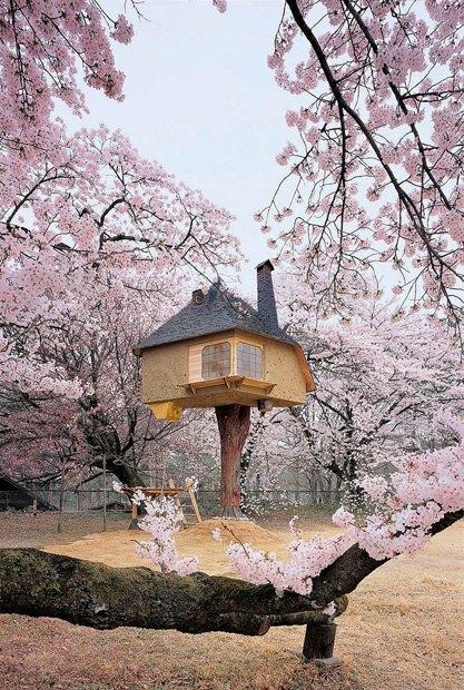 В Японии построили домик на дереве для любования сакурой. Изображение № 3.