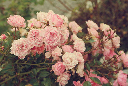 Изображение 8. Никогда не надо слушать, что говорят цветы. Надо просто смотреть на них и дышать их ароматом... Изображение № 8.