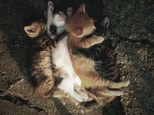 Фотографии животных. Изображение № 13.