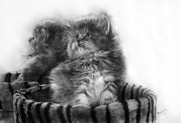 Paullung.и его коты. Изображение № 8.