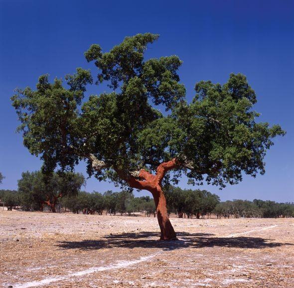 Изображение 9. Другая Португалия – необычное путешествие в страну пробковых лесов.. Изображение № 7.