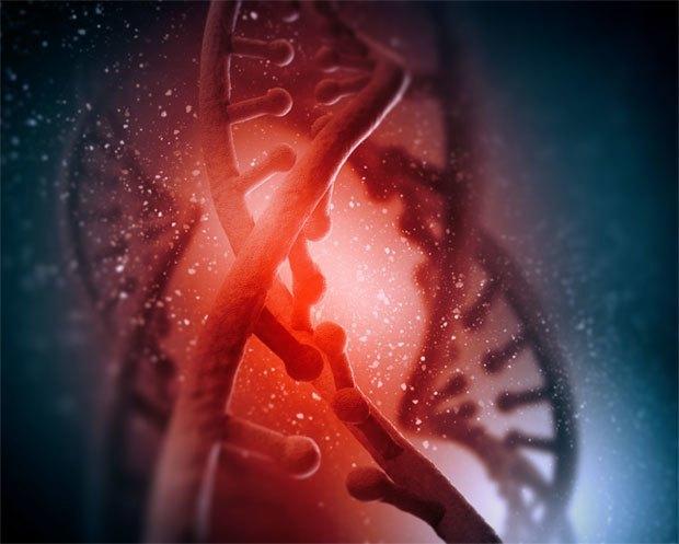 На что влияет обнаруженная в ДНК новая информация. Изображение № 2.
