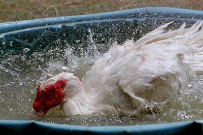 50 животных, которые ненавидят мыться. Изображение № 38.