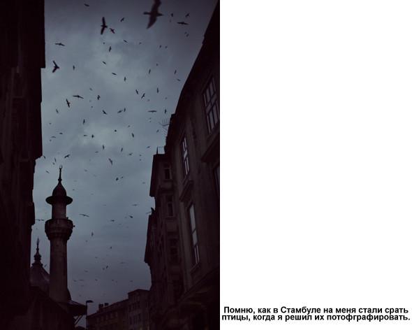 Фотограф – Виталий Шепелев. Изображение № 44.