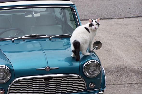 Котики и авто. Изображение № 15.