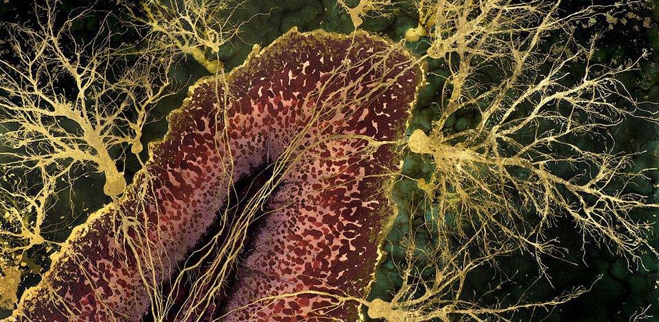 Головной мозг на загадочных картинах нейробиолога. Изображение № 11.