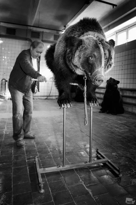 Best of Russia 2010. Изображение № 55.