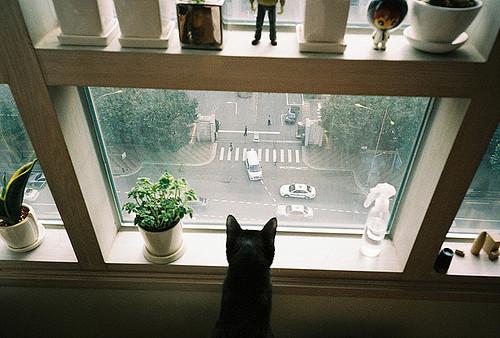 Flickr-галереи. Изображение № 56.