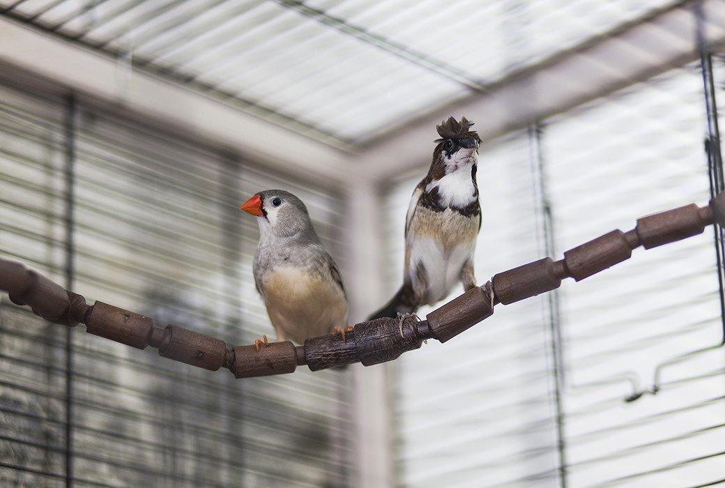 Экзотические птицы и старинные паркеты в архитектурном бюро «Практика». Изображение № 7.