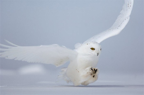 Лучшие снимки от National Geographic. Изображение № 23.