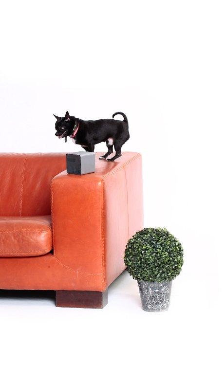 Как владелец шумной собаки придумал робота Petcube для питомцев. Изображение №5.