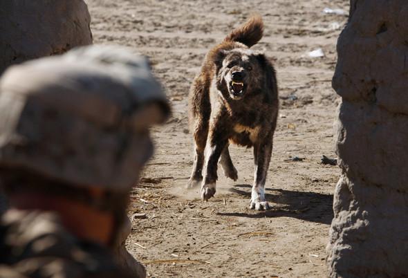 Афганистан. Военная фотография. Изображение № 28.