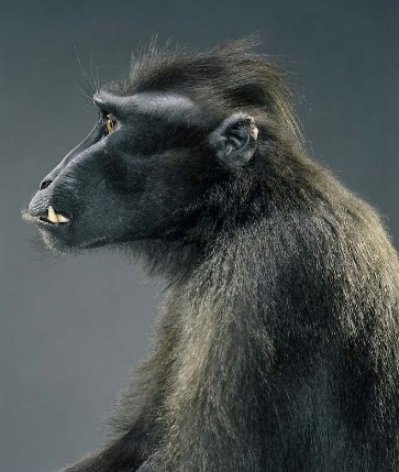 "Jill Greenberg ""Monkey portraits"". Изображение № 40."