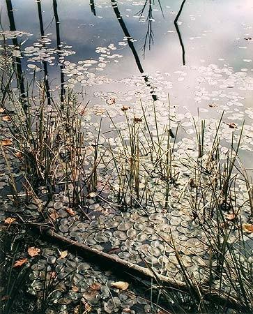 Элиот Портер: фотограф раскрасивший мир. Изображение № 2.