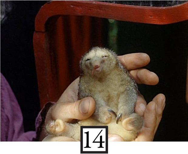 Вспомнить все: Фильмография Вернера Херцога в 20 кадрах. Изображение № 14.
