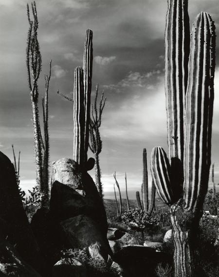 Brett Weston. Изображение № 3.