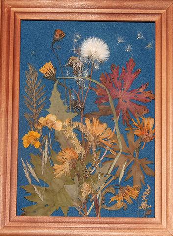Вера и цветы. Изображение № 6.