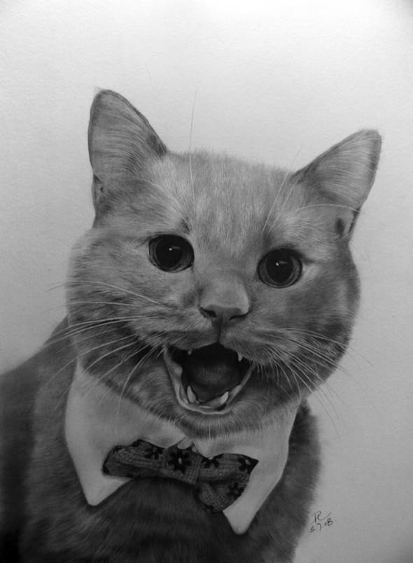 Кошки, люди, карандаш. Paul Lung. Изображение № 13.