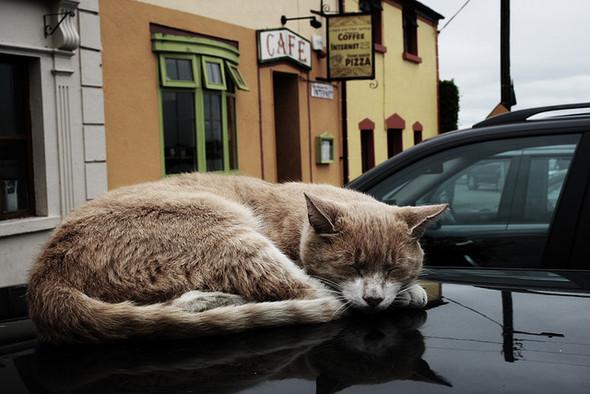 Котики и авто. Изображение № 12.