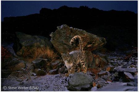 Победители Wildlife Photographer 2008. Изображение № 19.
