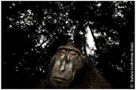 Победители Wildlife Photographer 2008. Изображение № 3.