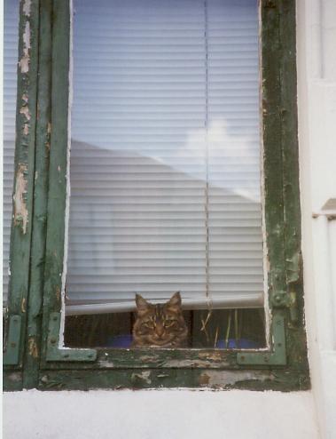 Cat. Window. Изображение № 5.