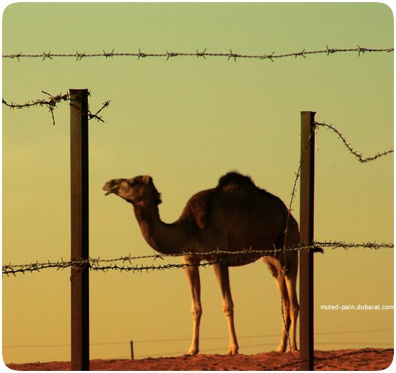 Hend AlAshram. Изображение № 11.